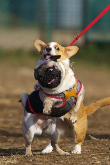 Cele mai haioase poze cu animale - Poza 18
