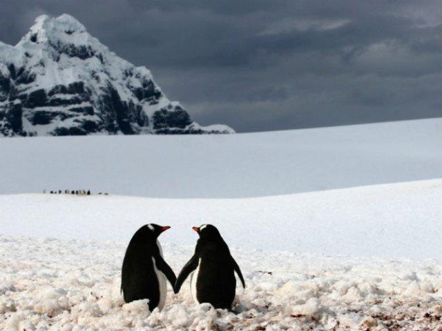Dragostea pluteste in aer: Tandrete in lumea animala - Poza 20