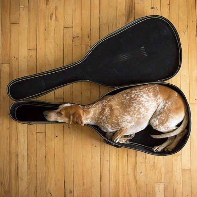 Cele mai haioase pozitii in care dorm animalele - Poza 4