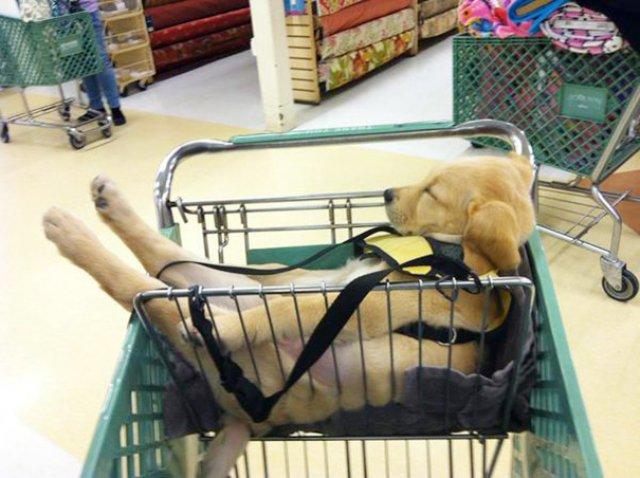 Cele mai haioase pozitii in care dorm animalele - Poza 5