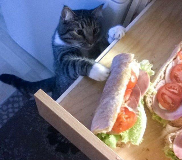 Pisici hoate, prinse in actiune - Poza 5