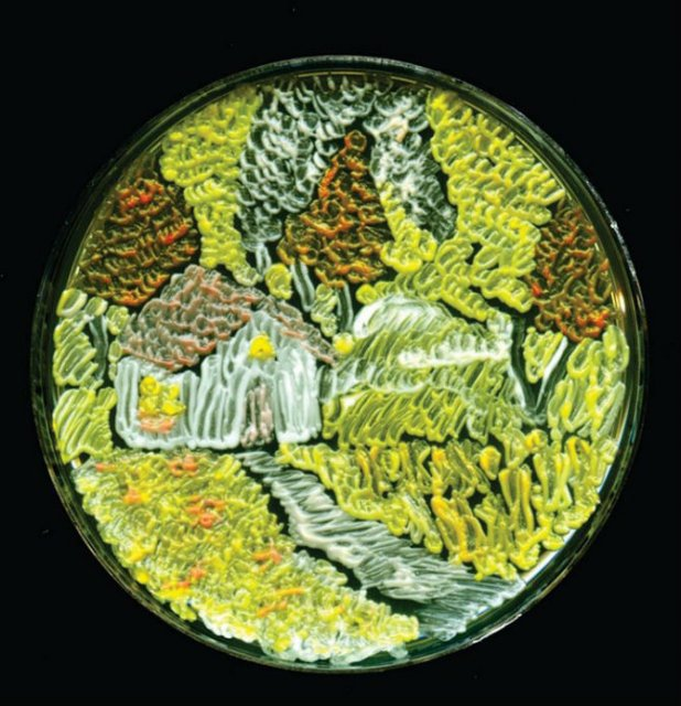 Creatii stiintifice: Arta cu microbi si bacterii - Poza 7