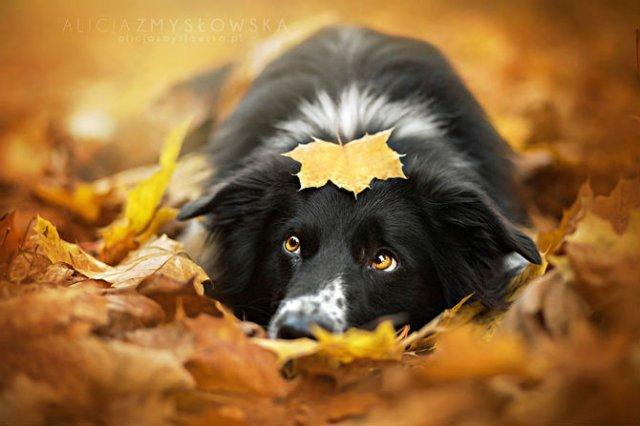 Cele mai frumosi caini, in poze de exceptie - Poza 8