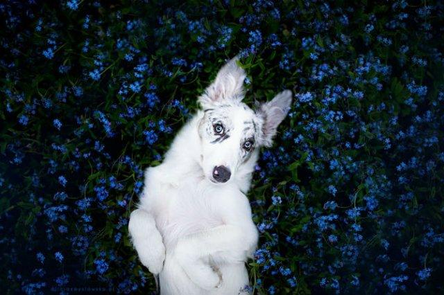 Cele mai frumosi caini, in poze de exceptie - Poza 9