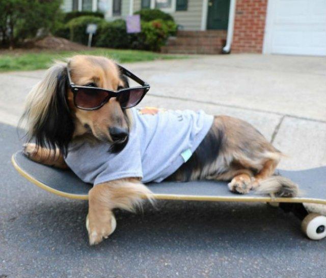 Cei mai haiosi caini cocheti, in poze cu stil - Poza 12