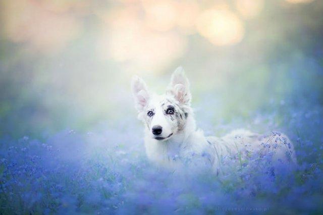 Cele mai frumosi caini, in poze de exceptie - Poza 3