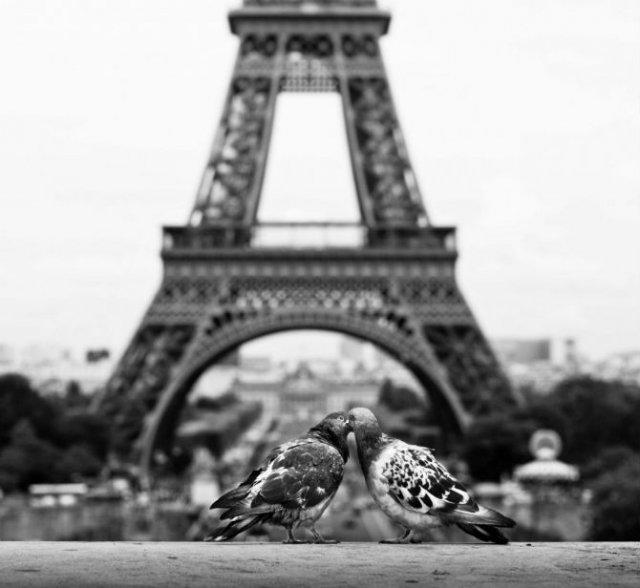 Dragostea pluteste in aer: Tandrete in lumea animala - Poza 19
