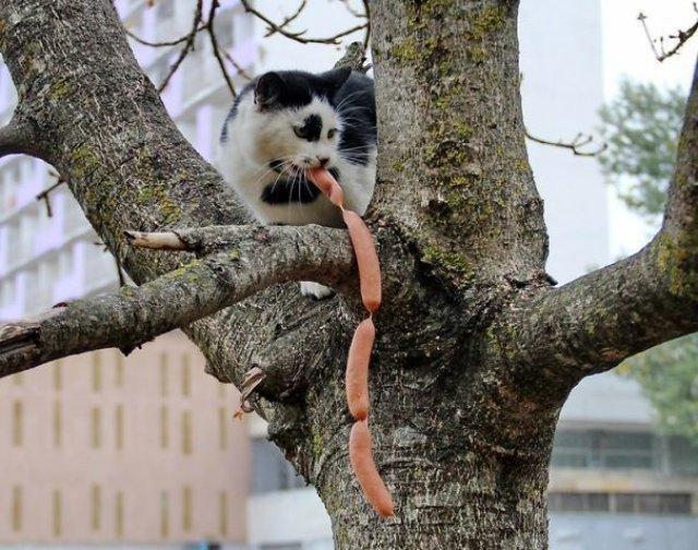 Pisici hoate, prinse in actiune - Poza 4