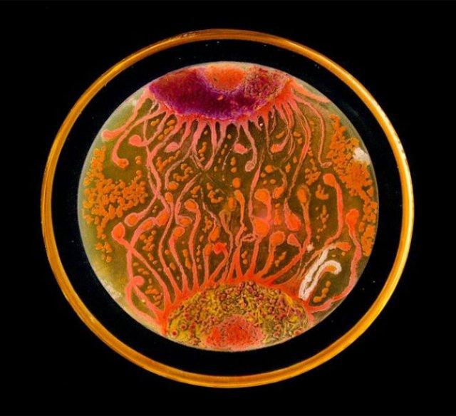 Creatii stiintifice: Arta cu microbi si bacterii - Poza 6