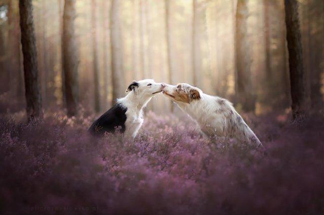 Cele mai frumosi caini, in poze de exceptie - Poza 7
