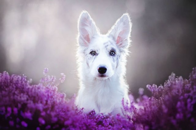 Cele mai frumosi caini, in poze de exceptie - Poza 1