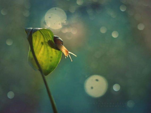 Lumea magica a melcilor, in poze superbe - Poza 12