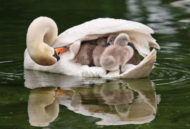 Lumea animalelor, in poze de familie - Poza 16