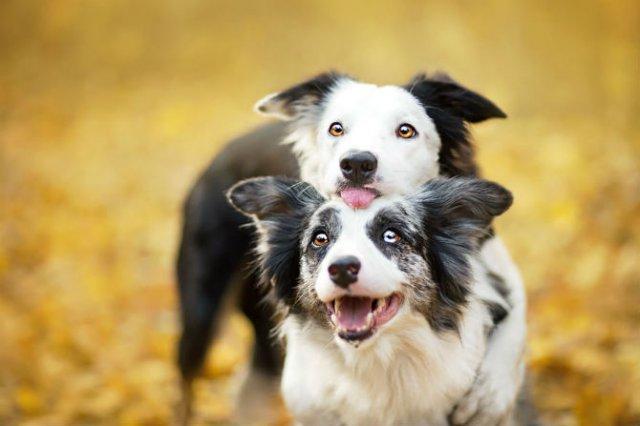 Cele mai frumosi caini, in poze de exceptie - Poza 6