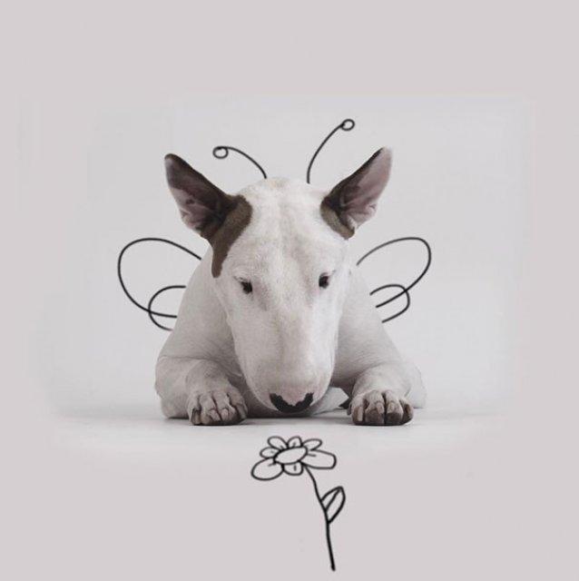 Bull Terrierul Jimmy Choo, intr-un pictorial trasnit - Poza 15