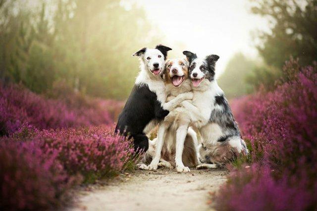 Cele mai frumosi caini, in poze de exceptie - Poza 2