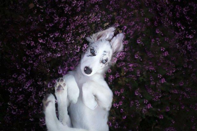Cele mai frumosi caini, in poze de exceptie - Poza 5