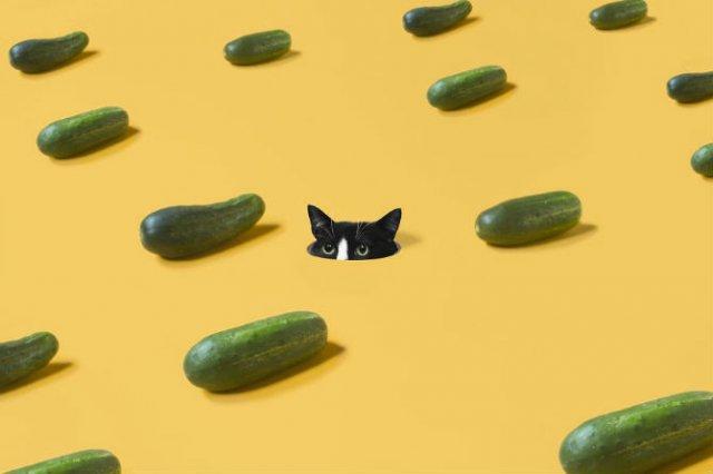 Cheeto, o pisica haioasa, intr-un pictorial trasnit - Poza 10
