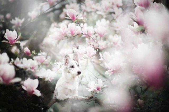 Cele mai frumosi caini, in poze de exceptie - Poza 4