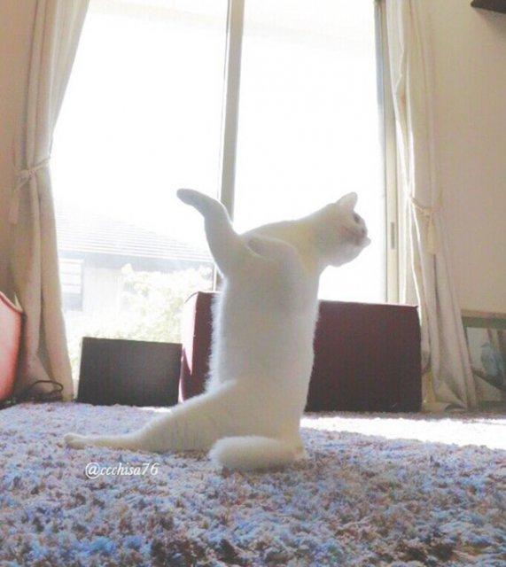 Mirko, cea mai talentata pisica balerina - Poza 8