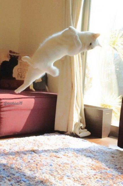Mirko, cea mai talentata pisica balerina - Poza 3