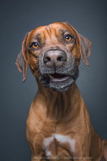 Caini expresivi, in portrete haioase - Poza 8