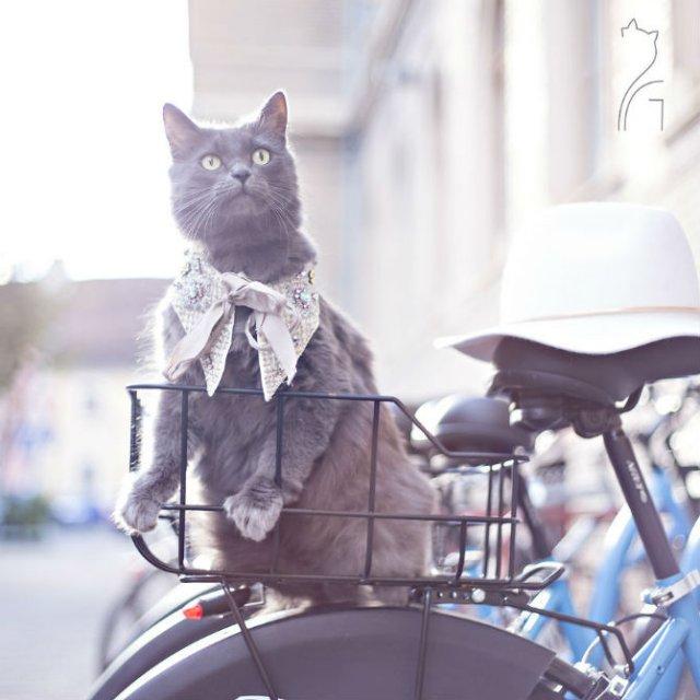 Cea mai cocheta pisica, in poze de colectie - Poza 11