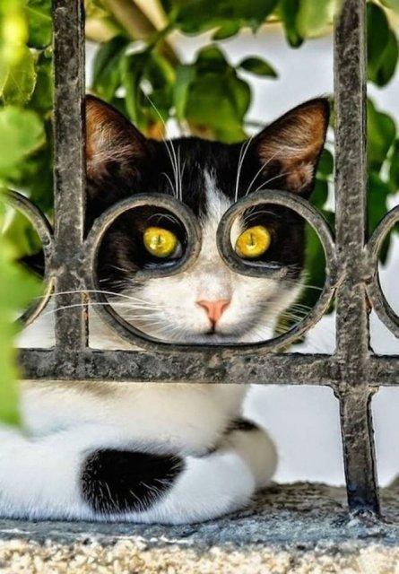 Altfel de poze cu pisici, in ipostaze haioase - Poza 5