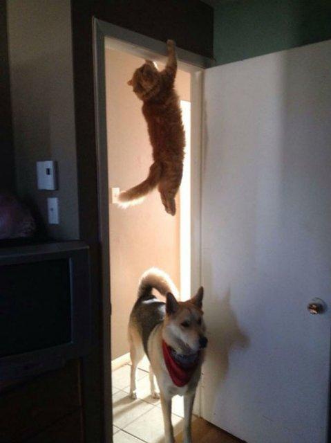 Altfel de poze cu pisici, in ipostaze haioase - Poza 6