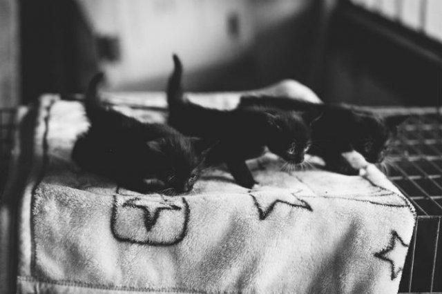 Pisici in alb si negru: Cel mai vibrant pictorial cenusiu cu feline - Poza 8