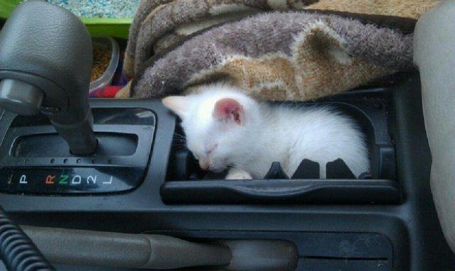 17 Pisici care dorm in cele mai haioase pozitii - Poza 8