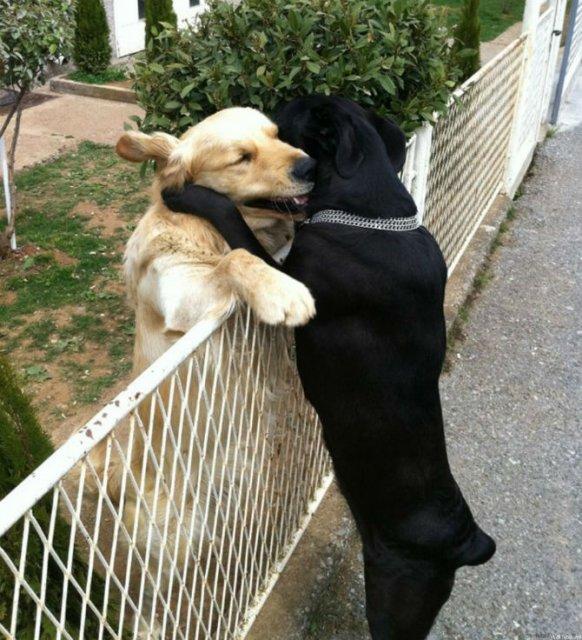 Dragostea pluteste in aer: Tandrete in lumea animala - Poza 18