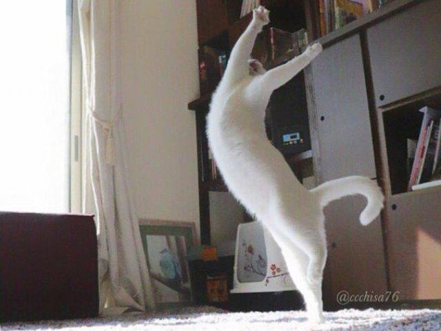 Mirko, cea mai talentata pisica balerina - Poza 7