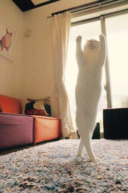 Mirko, cea mai talentata pisica balerina - Poza 1