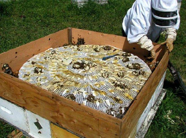 Sculpturi din portelan remodelate de albine - Poza 10
