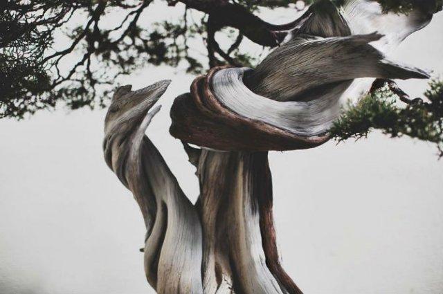 Unicitatea bonsailor, intr-un pictorial superb - Poza 15