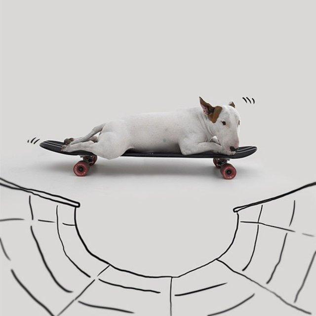Bull Terrierul Jimmy Choo, intr-un pictorial trasnit - Poza 14