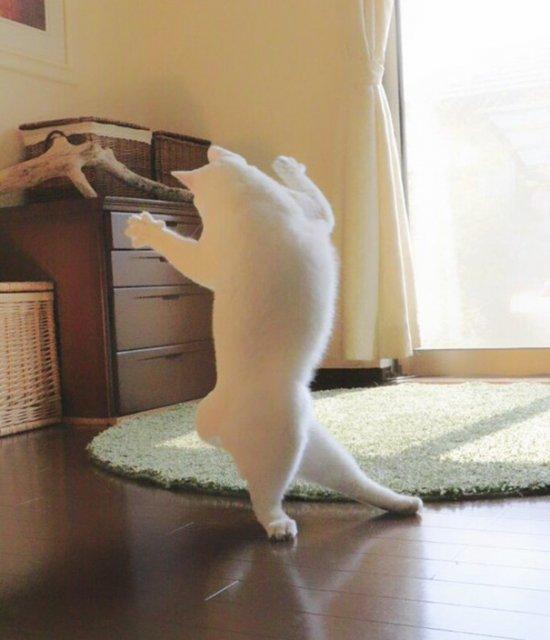Mirko, cea mai talentata pisica balerina - Poza 6