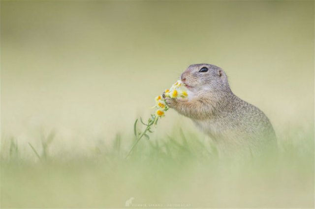 Rozatoare adorabile, intr-un pictorial haios - Poza 4