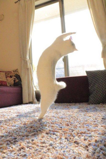 Mirko, cea mai talentata pisica balerina - Poza 2