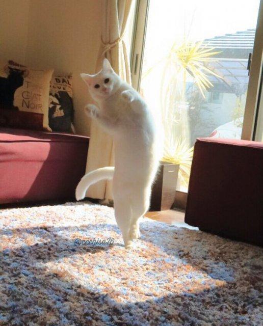 Mirko, cea mai talentata pisica balerina - Poza 5