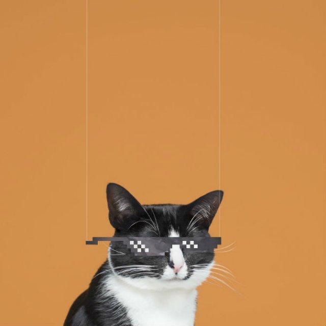 Cheeto, o pisica haioasa, intr-un pictorial trasnit - Poza 9