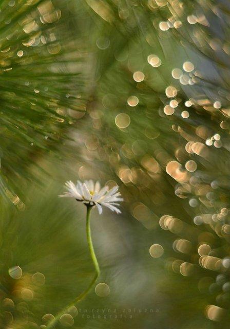 Florile ochilor mei: Picturi din sanul naturii - Poza 18