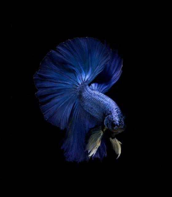 Portrete spectaculoase cu pesti de acvariu - Poza 10