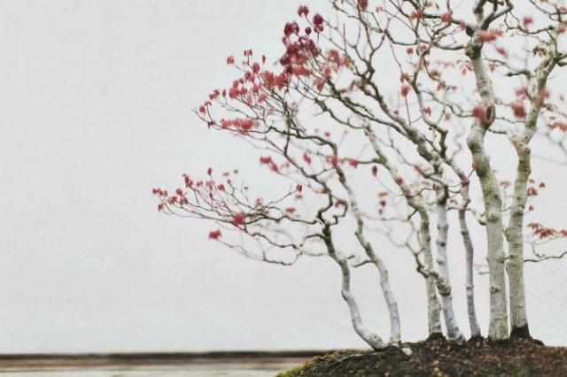 Unicitatea bonsailor, intr-un pictorial superb - Poza 14