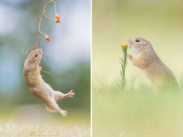 Rozatoare adorabile, intr-un pictorial haios - Poza 3