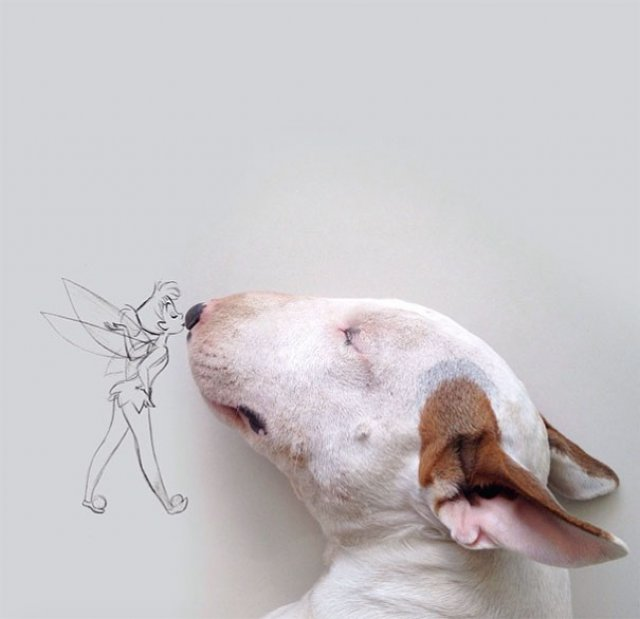 Bull Terrierul Jimmy Choo, intr-un pictorial trasnit - Poza 13