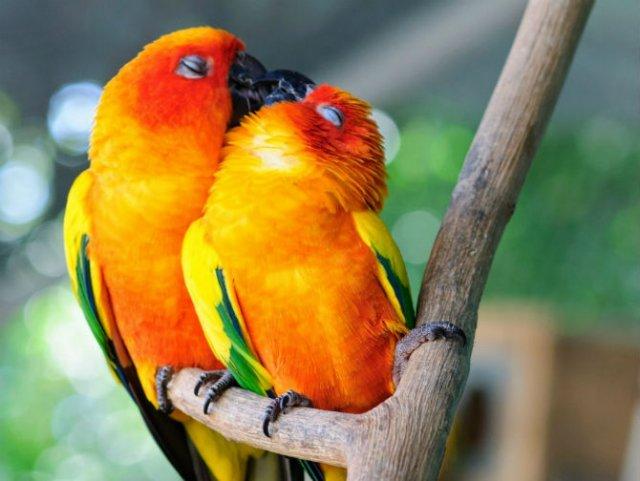 Dragostea pluteste in aer: Tandrete in lumea animala - Poza 17