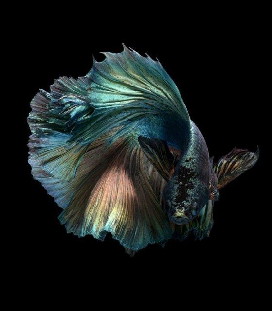 Portrete spectaculoase cu pesti de acvariu - Poza 9