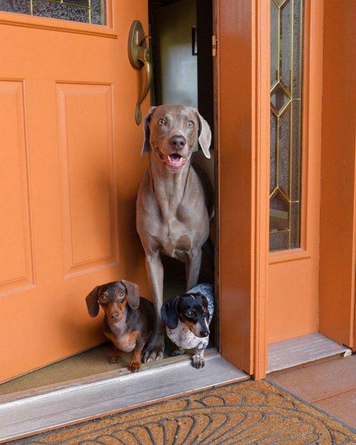 Trei prieteni de nedespartit, in poze adorabile - Poza 14